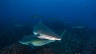 Diving Galapagos 2014
