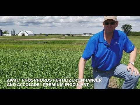 Phosphorus Efficiency and Seed Treatment Results on Wheat in Canada