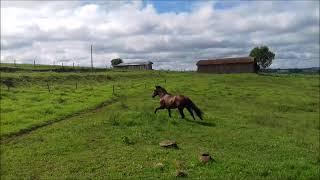 Cavalo Campeiro EXPOLONDRINA