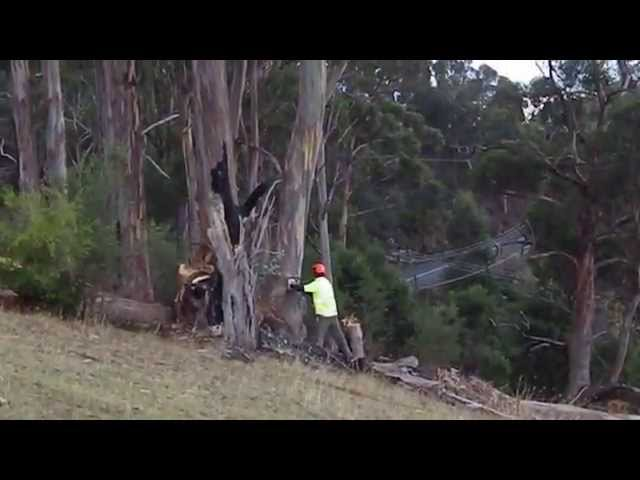 Irwin Clements Tree Service - Bonnet Hill TAS 7053