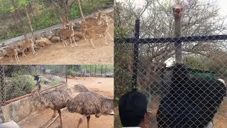 Ostrich, Emu, Deers and more videos compilation || Animal videos..