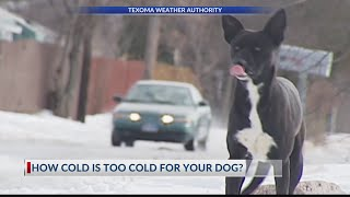 How cold is too cold for your dog?