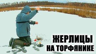 Ловля окуня на торфяных озерах зимой