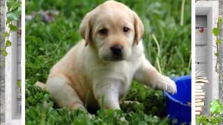 Подборка отличных фотографий собак