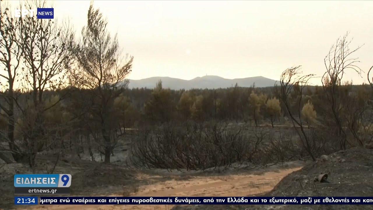 Η επόμενη μέρα για τα δάση που έγιναν στάχτη: Τι λένε οι ειδικοί ΕΡΤ 11/8/2021