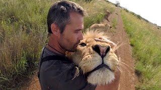 Meet The KINGS!!! | The Lion Whisperer