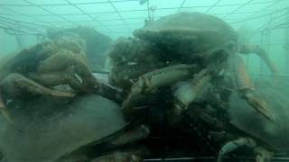 I Put A GoPro In My Crab Trap. You Won't Believe What Happened.