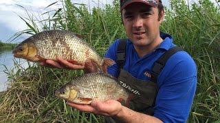 Big Roach On The River - Pole Feeder Fishing!