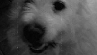 Le chien de l'enfer