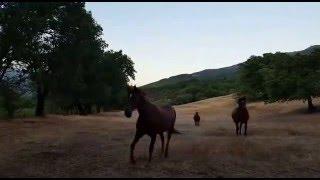 Video del alojamiento La Casería