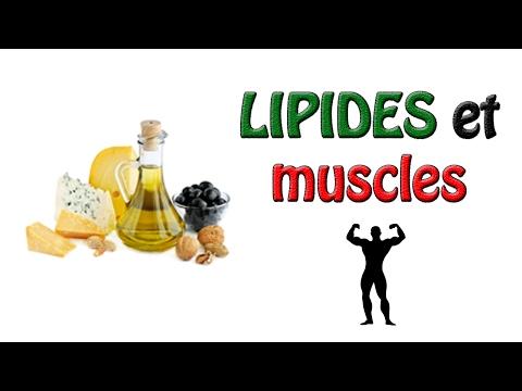 La circulation sanguine des organismes et les muscles
