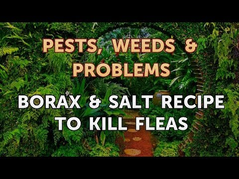 Borax & Salt Recipe To Kill Fleas Mp3