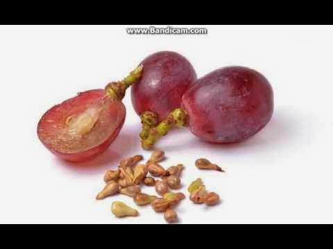 Video Inilah Manfaat Biji Anggur Untuk Kesehatan