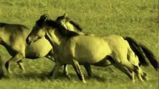 Chris Rea - Horses