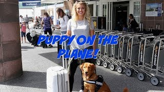 HOW TO FLY WITH A DOG!