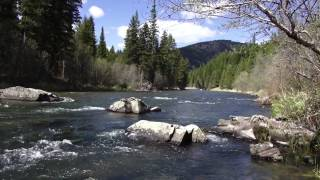 Big Sky Outdoors- Fishing the Salmon fly hatch