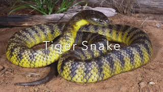 Most Dangerous And Deadly Snakes
