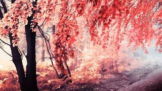 LOVE & LOSS | Mattia Cupelli - Full Album [2013]