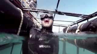 Shark Adventures - Shark Cage Diving, Cape Town