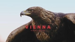 Vienna from an eagle