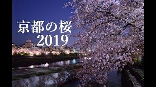 【2018】京都の桜おすすめランキング | Kholo.pk