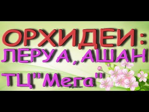 """Прекрасные ОРХИДЕИ в ТЦ """"Мега"""":ЛЕРУА,Ашан,14.05.21,Самара."""