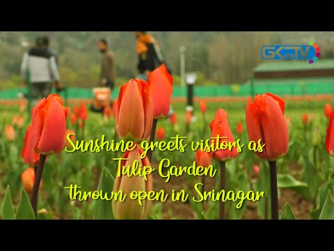 Sunshine greets visitors as Tulip Garden thrown open in Srinagar