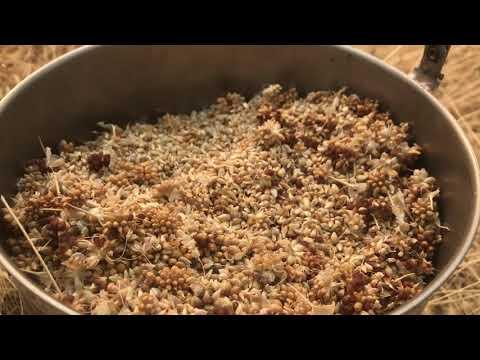 , title : 'Foraging wild onion/garlic(year supply in 2 hours!)