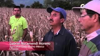 Especiales Noticias - Acciones contra el cambio climático