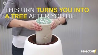 This Urn Turns You Into a Tree After You Die
