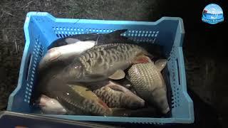 Платная водоемов для рыбалка в одесской области 2020