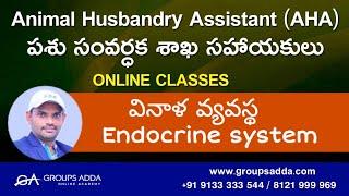 వినాళ వ్యవస్థ ll Endocrine system ll Animal Husbandry Assistant ll Online Classes ll Groupsadda ll
