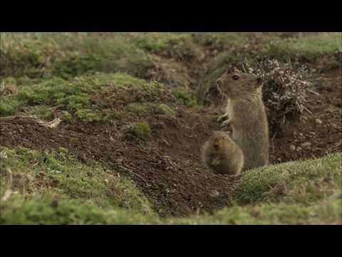 أفلام الطبيعة HD … الفئران بعد الجليد
