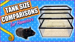 Tank Size Comparisons For Hamsters