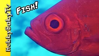 Download Video REAL SURPRISE FISH! Learn Colors with Fishy's Puzzle + Fun with HobbyKids of HobbyBabyTV MP3 3GP MP4