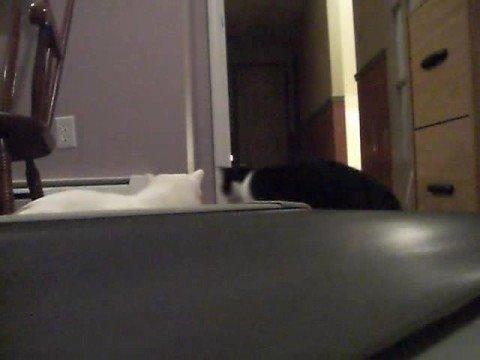 Cats vs. treadmill