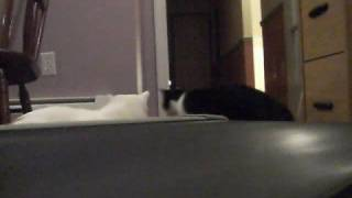 Кошки и беговая дорожка