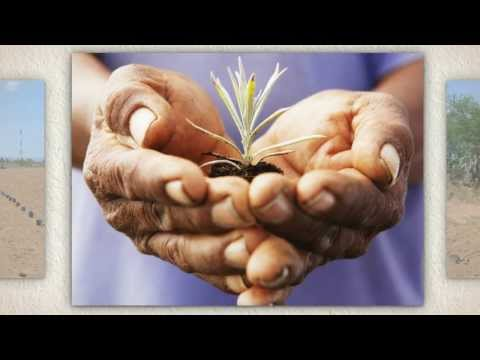 Somos una empresa agrícola rural Mexicana cuyo principal propósito es dar sustento a nuestras familias.