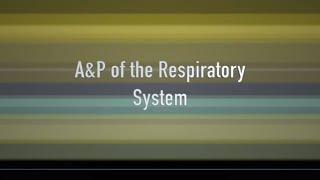 Respiratory Anatomy and Physiology of the Companion Animal (VETERINARY TECHNICIAN EDUCATION)