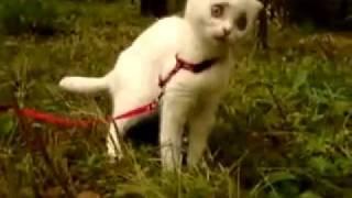 ШОК Кот из Шрека