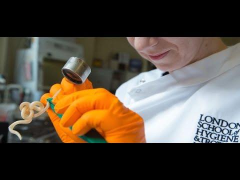 ARGO parazitaellenes készítmények
