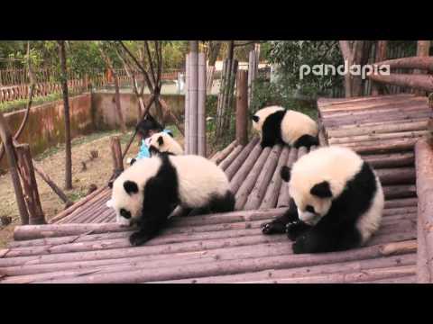 萌萌地~熊貓喝ㄋㄟㄋㄟ