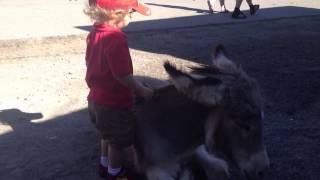 Petting Donkeys on Oatman