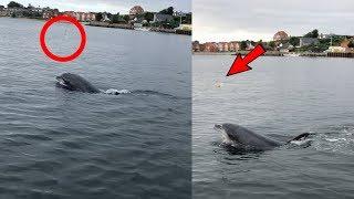 animale delfinul si meduza