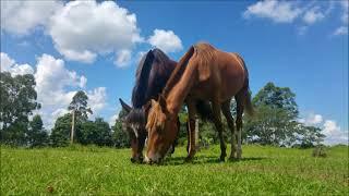Cavalo Campeiro, onde andará?