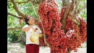 Best Organic Fruit Farm