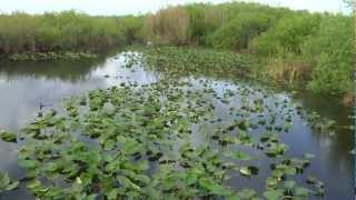 Florida National Everglades Park Documentary