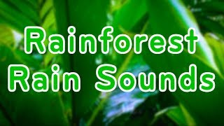 Rainforest Rain Sounds For Relaxation   Sleep Or Study   10 Hours White Noise