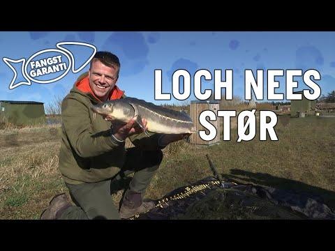 Størfiskeri i Loch Nees med Fangstgaranti
