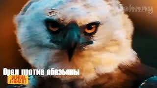 15 Terrible attacks of eagles filmed on camera
